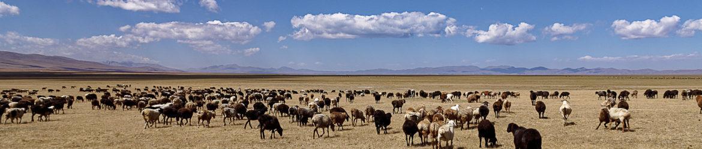 cropped-Kirgistan_177.jpg